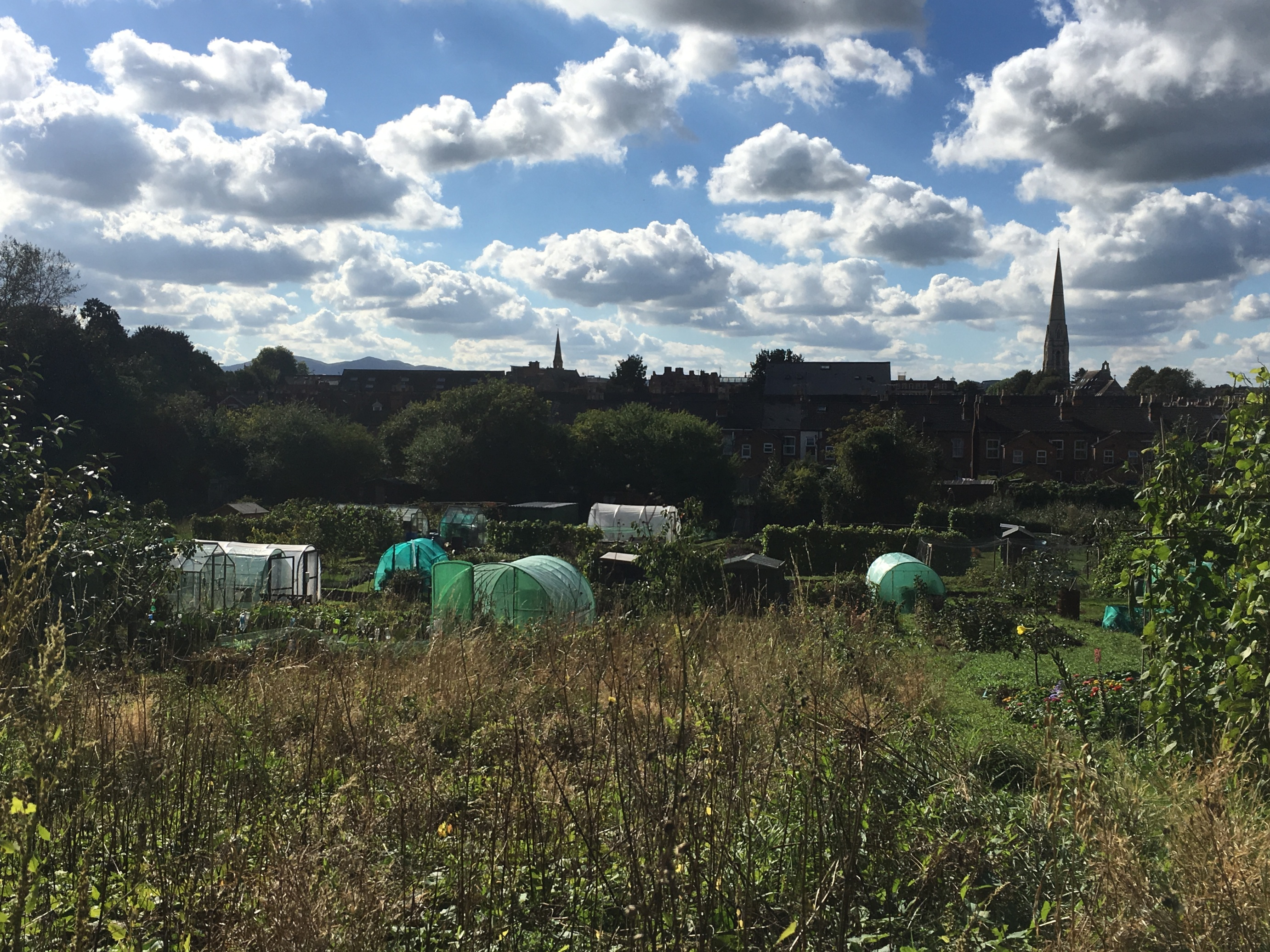 The Arboretum, Worcester, as seen from the allotments on the other side of the Worcester-Birmingham Canal